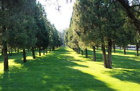 绿色草地和树林