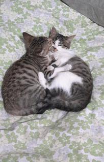 甜蜜好睡的小花猫