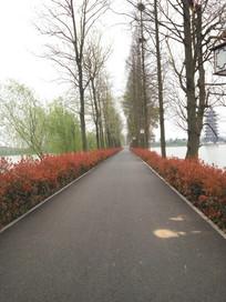 洋湖公园的林间小道