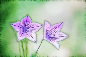 电脑画《桔梗花》