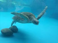 飞舞的海龟