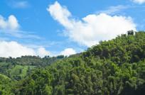 绿色的森林