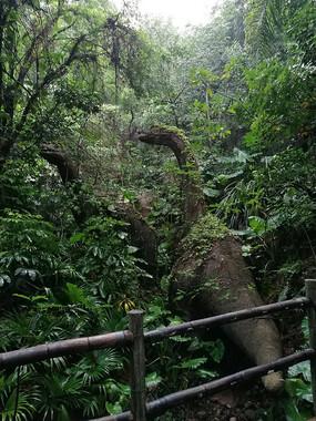 热带雨林动物