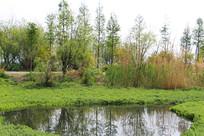 沼泽边生长的植物
