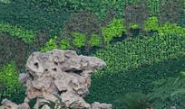 太湖石和绿植屏