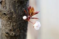 树干上盛开的小花