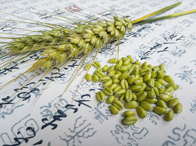 背景素材麦穗