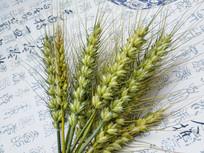 麦穗中国风背景