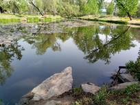 湖面上的倒影图片