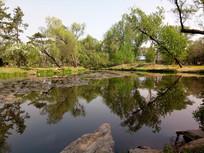 湖中的树影图片