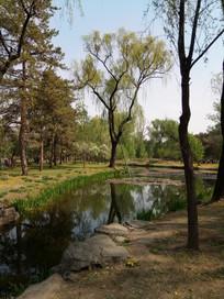 柳树下的池塘图片