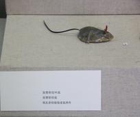 民国纸扎彩绘提线老鼠