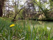 小草旁的小河图片