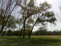 草地上的树林图片