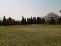 草地上的松树林图片