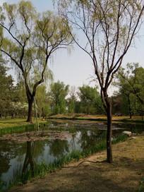 池塘边的两棵大树