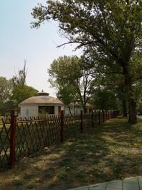 大树旁白色蒙古包图片