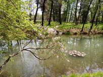 丁香树下的青青河水