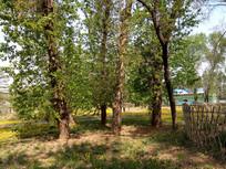 地上的大树图片