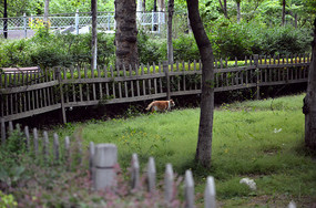 公园里的猫