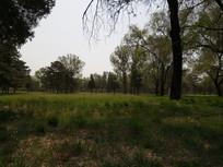 绿色的树林图片