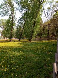 倾斜的树旁的草地