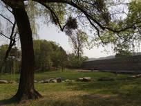 伸展的树枝图片