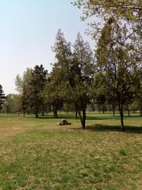 树林里草地上的石头
