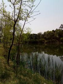 树旁的河图片