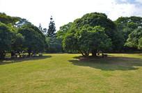 草地上的茂盛的大树