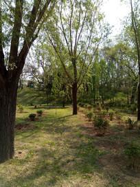 绿草地上的大树图片
