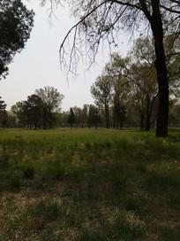树枝下的草地