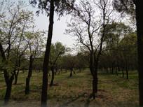 草地里的树林子图片