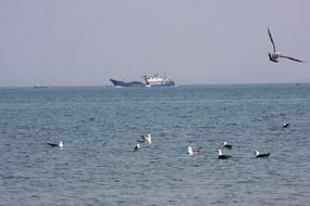 海鸥自由飞翔
