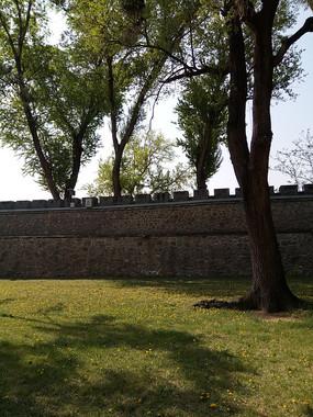 墙边的大树图片