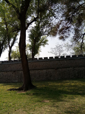 墙边的一棵大树图片