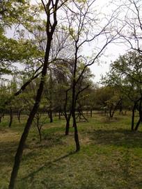 树林里的小树图片