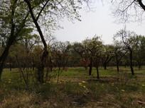 树林子图片
