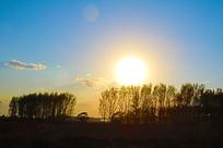 透过夕阳光芒的杨树与枯草