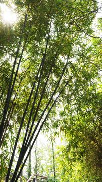 唯美的竹林