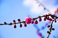 红色花朵细致图