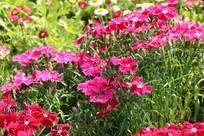 鲜艳的花朵图片