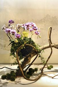 野趣蝴蝶兰插花
