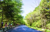 千山公路与两排树木