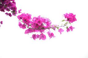 紫色花开了
