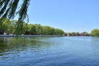 北京中海河岸杨柳