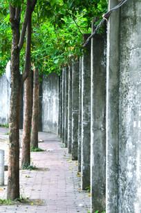 树木与围墙