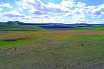 早春的牧场风景