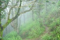 雾气茫茫的山林