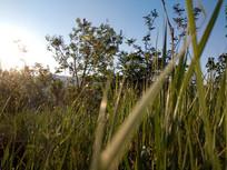 山坡上的草地图片